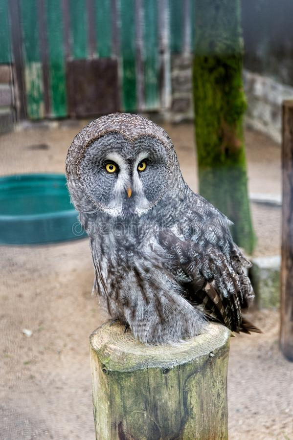 Save a bird, save yourself. Cute owl bird with large eyes and hawk beak. Owl bird perched in zoo cage. Prey bird of stock images