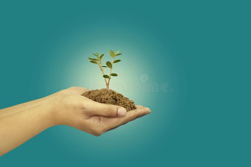 Save the earth, tree seeds in hand royalty free stock photography