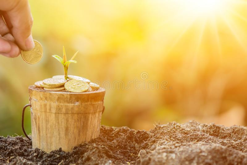 Save environment and new transformation life concept. Small plant growing in the garden. Fresh start of the day. Save environment and new transformation life stock images