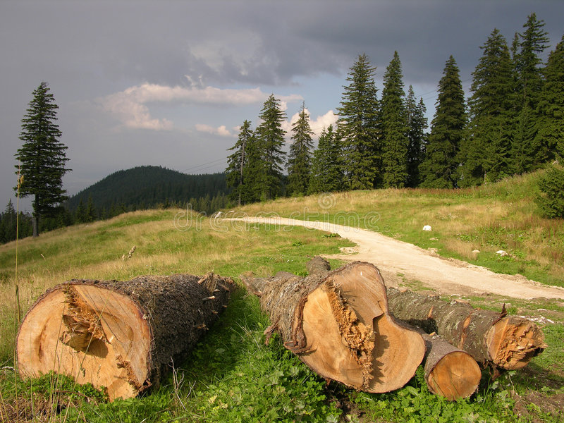 Download Save The Forest! stock photo. Image of logs, forests, clouds - 215400