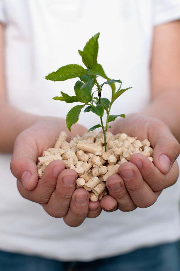Download Save the Nature stock image. Image of focus, bio, alternative - 30421527