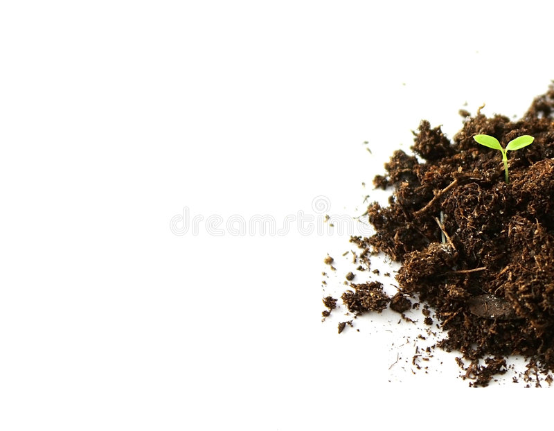 Save the planet. A sprout growing in the dirt stock image