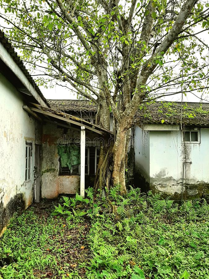 Save tree protect earth. Barnhouse, sve, saved royalty free stock photography