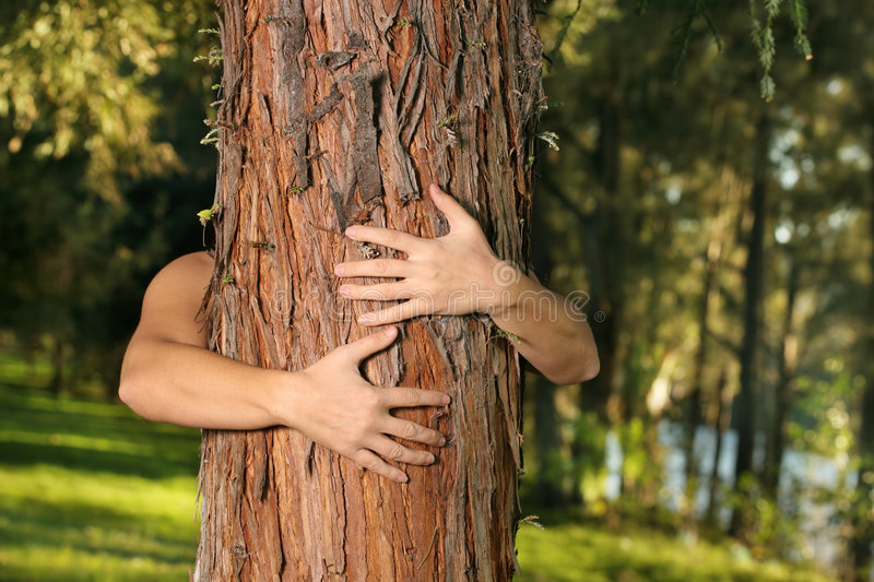 Save the trees. A treehugger conservationist with arms wrapped around a conifer. f.8 royalty free stock photography