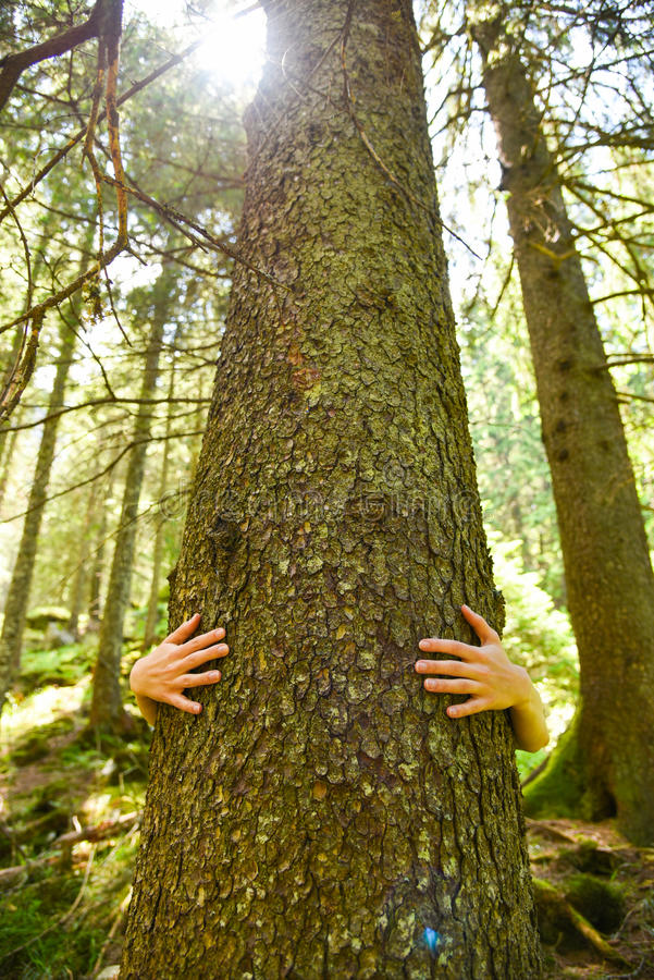 Save the trees. Arms of an environmental activist hugging a tall tree, green background stock images