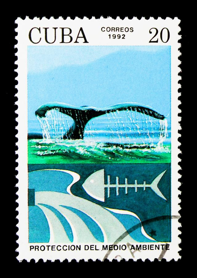 Save the Whales, Environmental Protection serie, circa 1992. MOSCOW, RUSSIA - NOVEMBER 25, 2017: A stamp printed in Cuba shows Save the Whales, Environmental stock images