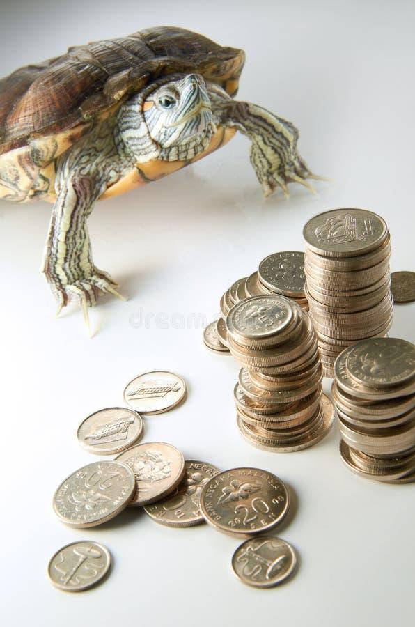 Saving. Turtle guarding up your saving stock image