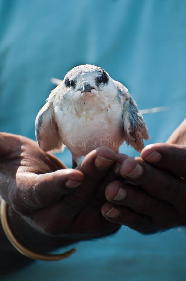 Download Saving an injured bird stock photo. Image of environmental - 18520000