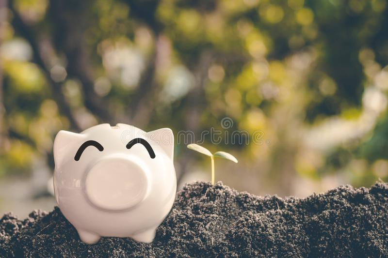 Saving money in pig bank for future use, Concept saving money for the future.  royalty free stock images