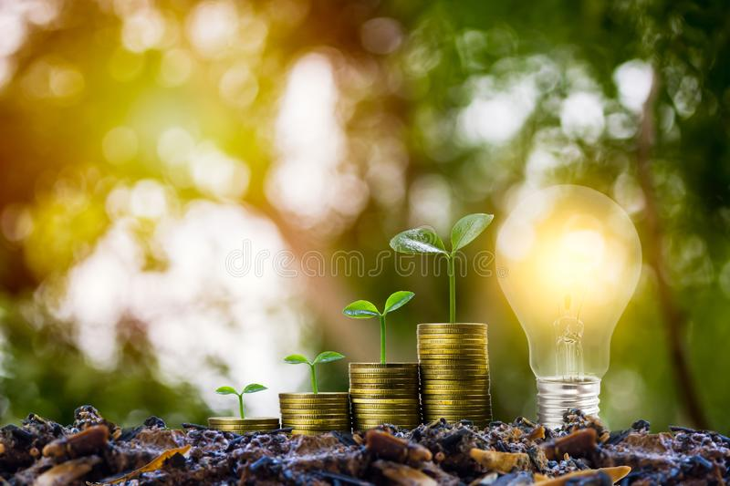 Savings and investment concept. Plant growing on stack of coins with Light bulb. Depicts idea for growing business and finance royalty free stock photography