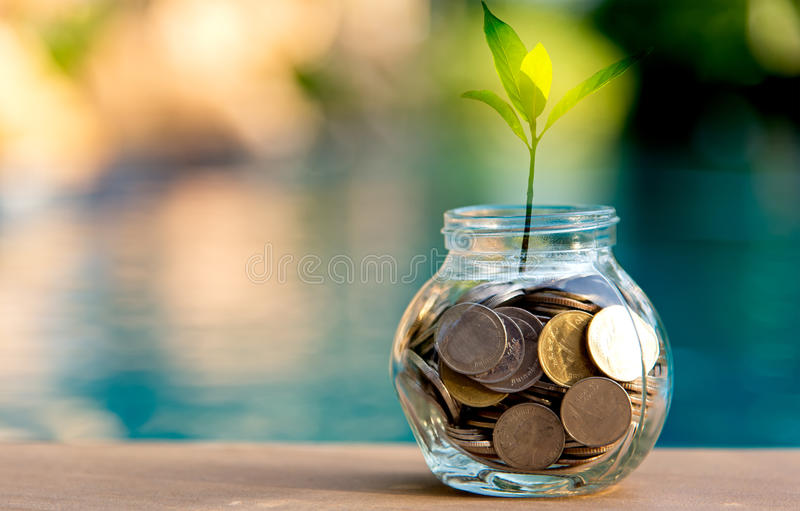 Savings money coin full of glass piggy. Plant Growing In Savings Coins stock photos