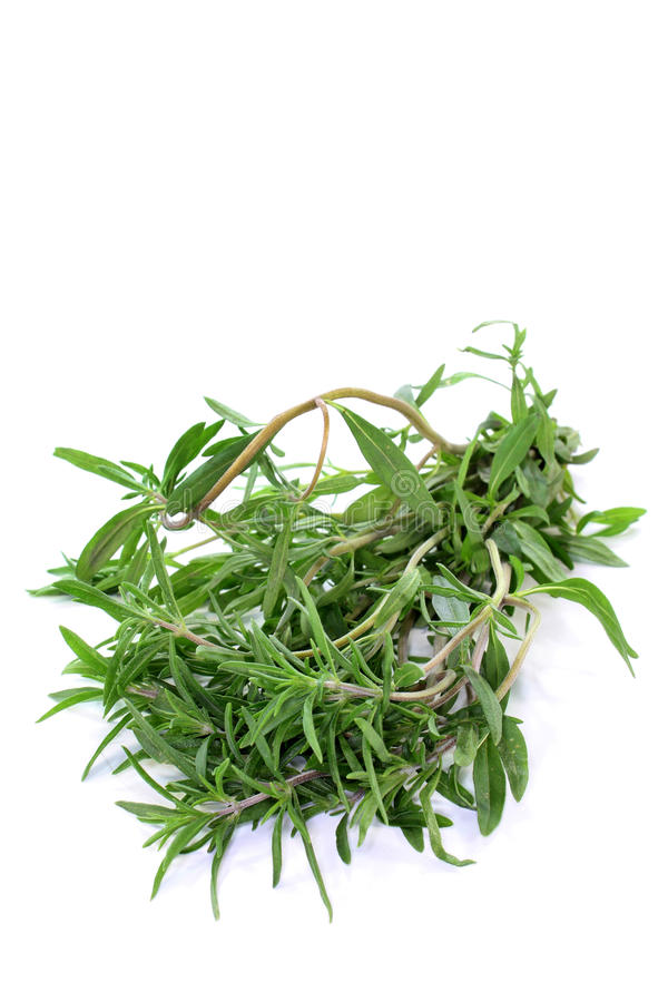 Savory. A bunch of summer savory in front of white background royalty free stock photography
