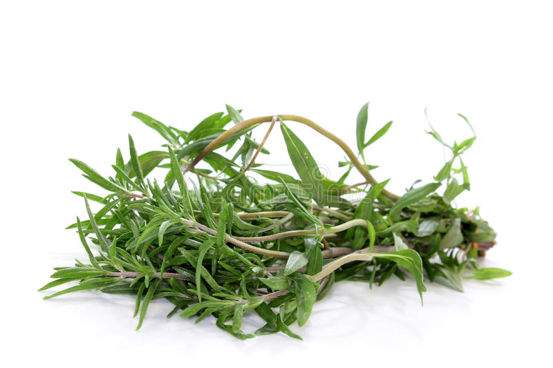 Savory. A bunch of summer savory in front of white background royalty free stock photos