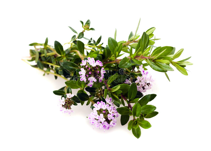 Download Savory flowers stock image. Image of herbs, branch, aromatherapy - 24521979