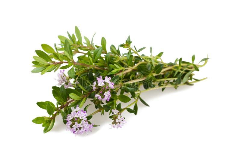 Savory flowers. On white royalty free stock photo
