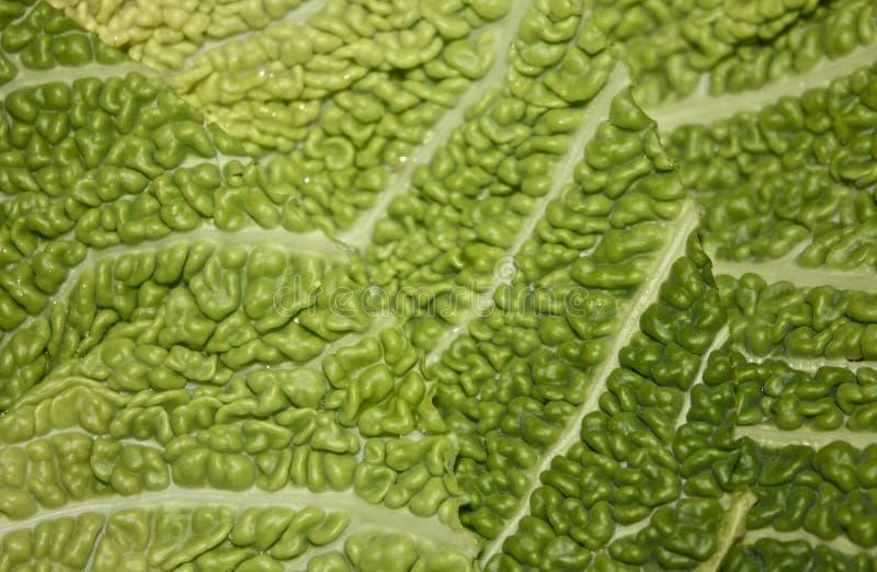 Download Savoy Cabbage stock photo. Image of savoy, vegetarian - 23325208