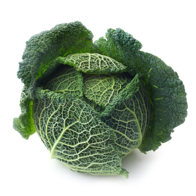 Savoy Cabbage foto de stock royalty free