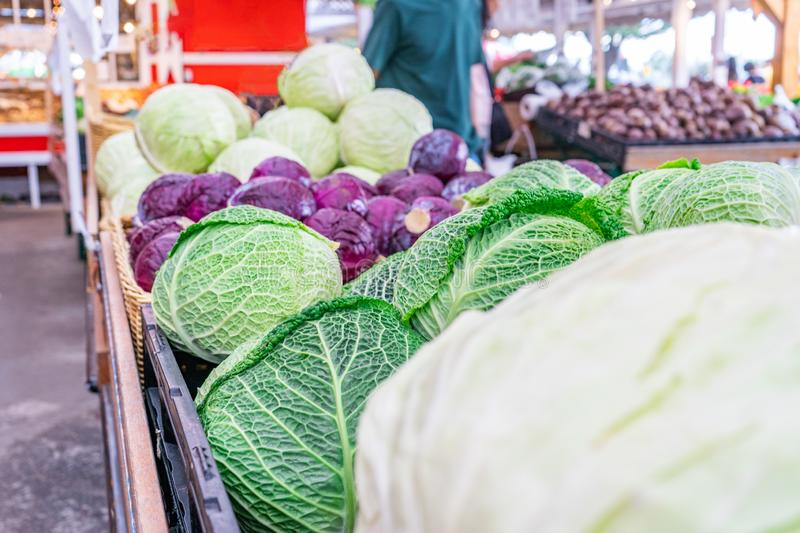 Savoy cabbage, red cabbage and green cabbage in bulk at a farm market grocery store.  royalty free stock photography