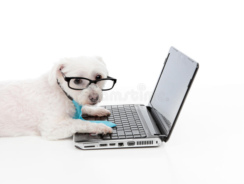 Savvy dog using a computer laptop. A smart dog or savvy shopper dog using the laptop and or internet