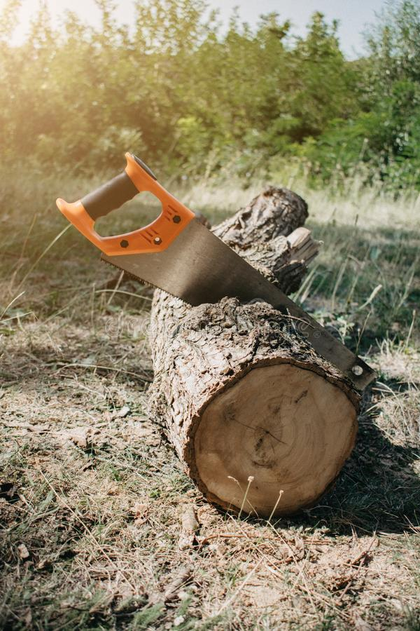 Saw in a log outdoor. Sawing wood for campfire in the forest. Cutting log of wood timber to making campfire on nature stock image