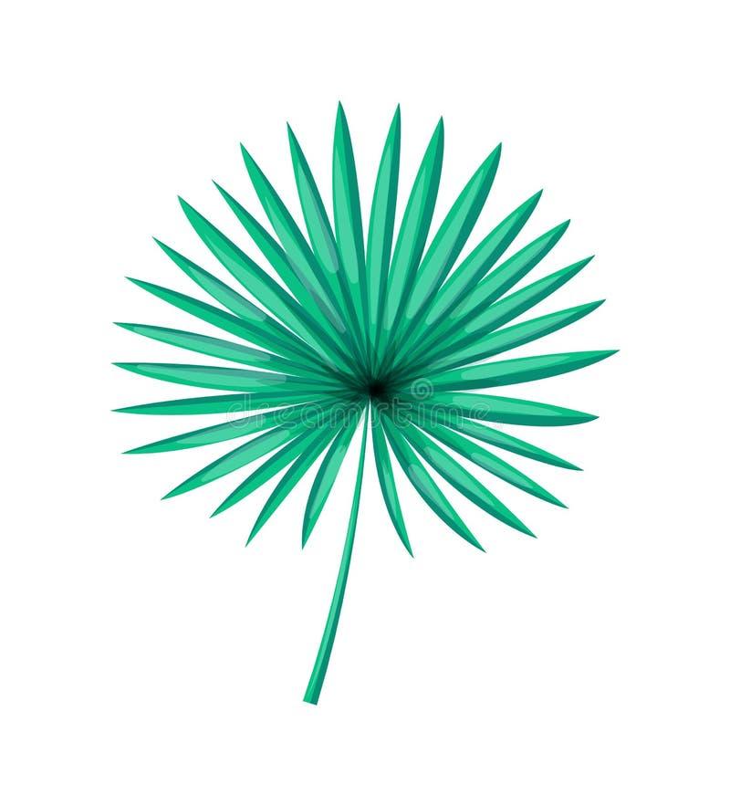 Saw Palmetto Isolated White Palm Tree Green Leaf. Saw palmetto isolated on white, palm tree green leave realistic design cartoon vector illustration, beautiful stock illustration