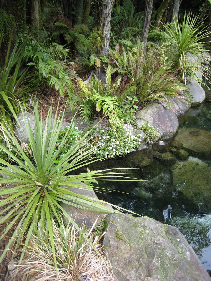 Saw palmetto beside of the lake. New Zealand,  Rotorua at Rainbow Springs Nature Park royalty free stock image