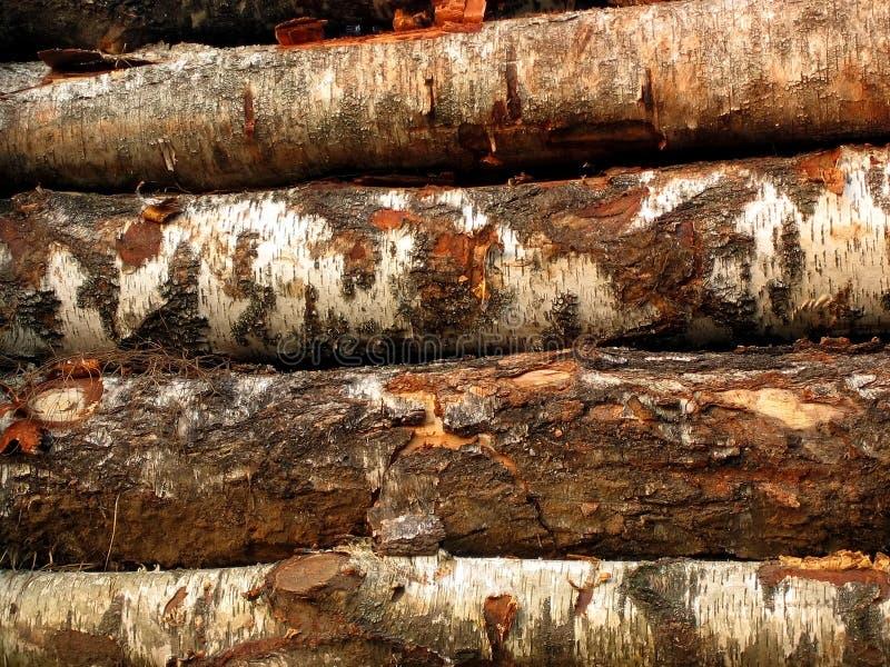Saw-timber 2 royalty free stock photos