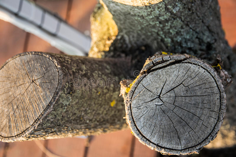 Saw trees in the city stock photography