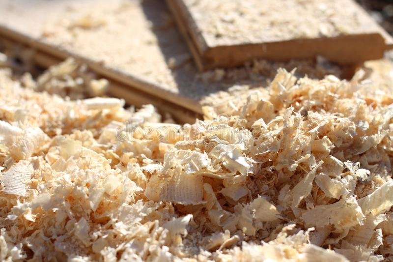 Sawdust and light wood shavings close-up the carpentry workshop after sawn timber processing royalty free stock photography
