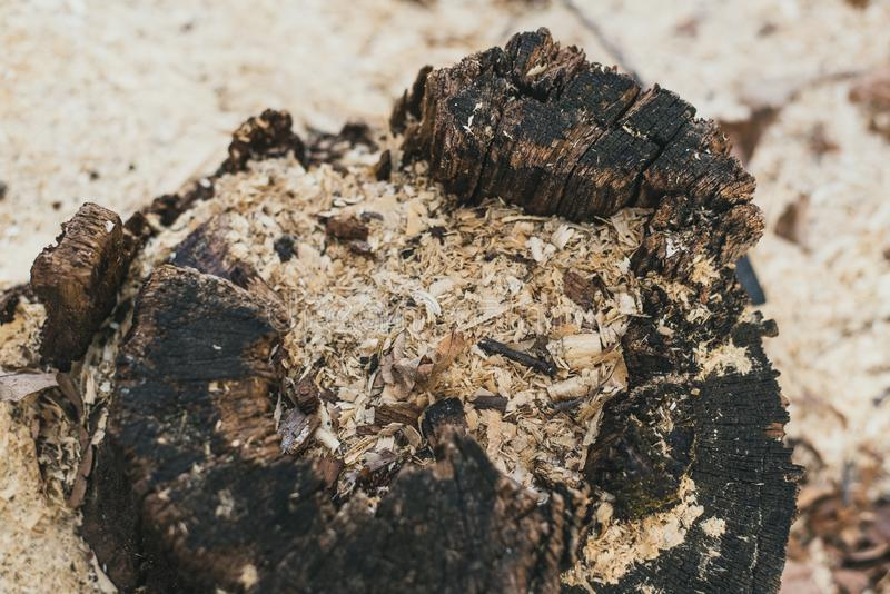 Sawdust saw cut. sawing waste, environmental problems. people sawed wood into pieces. stock image