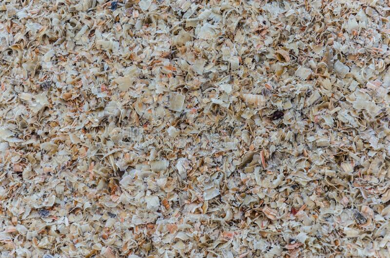 Sawdust or wood dust texture background. Wood sawdust background closeup. Sawdust floor texture. Top view. Saw dust royalty free stock photo