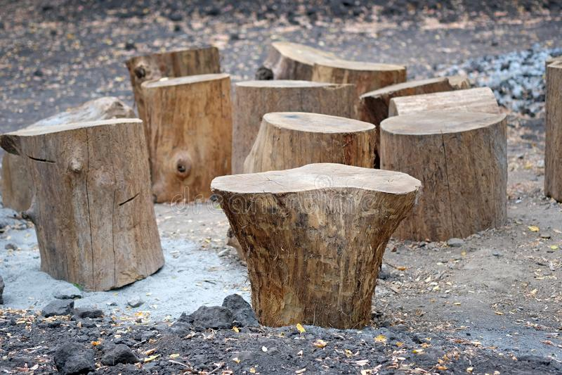 Sawed off sections of thick round tree trunks stand on the ground. Sawing round timber. Logging firewood. Use pieces of wood as chairs royalty free stock photography