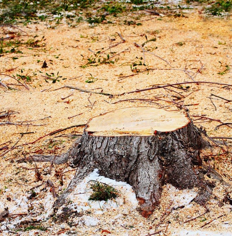 Sawed tree