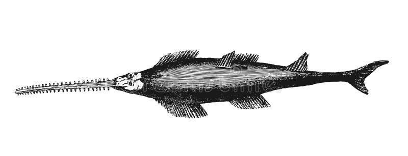 Sawfish ilustracja wektor
