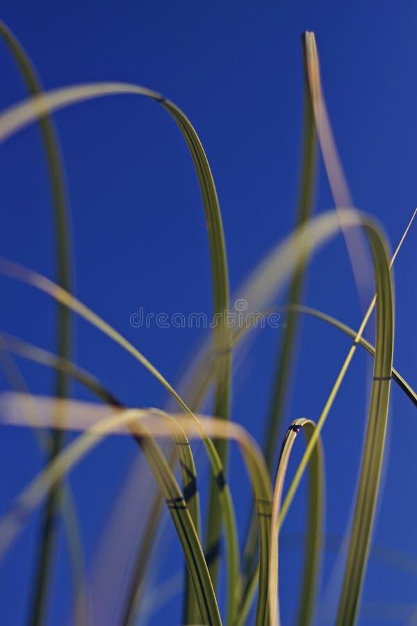 Sawgrass royalty free stock photo