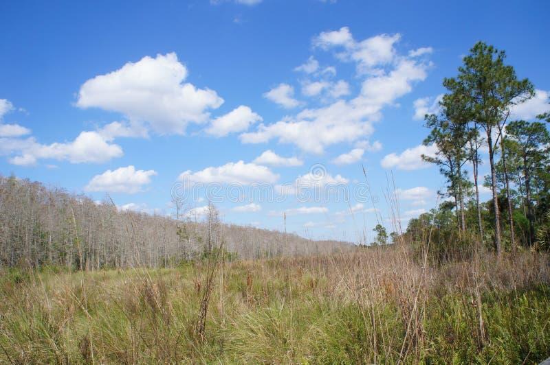 Sawgrass prärie på korkskruvträskfristaden royaltyfri bild