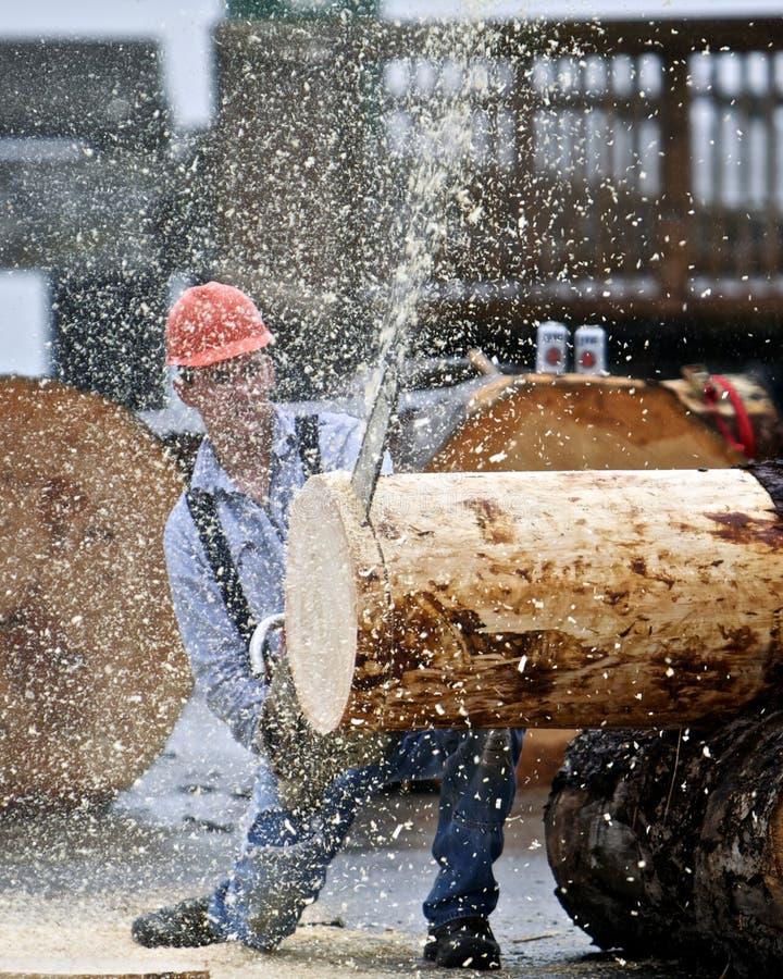 Sawing della presa del legname fotografia stock