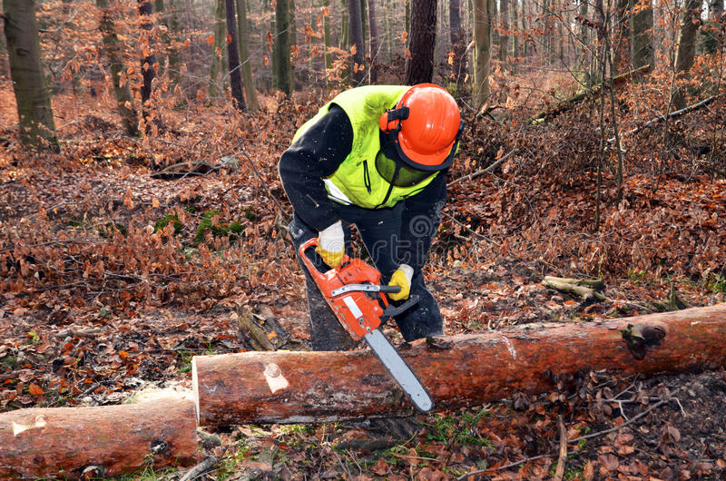 Sawing in the forest royalty free stock images