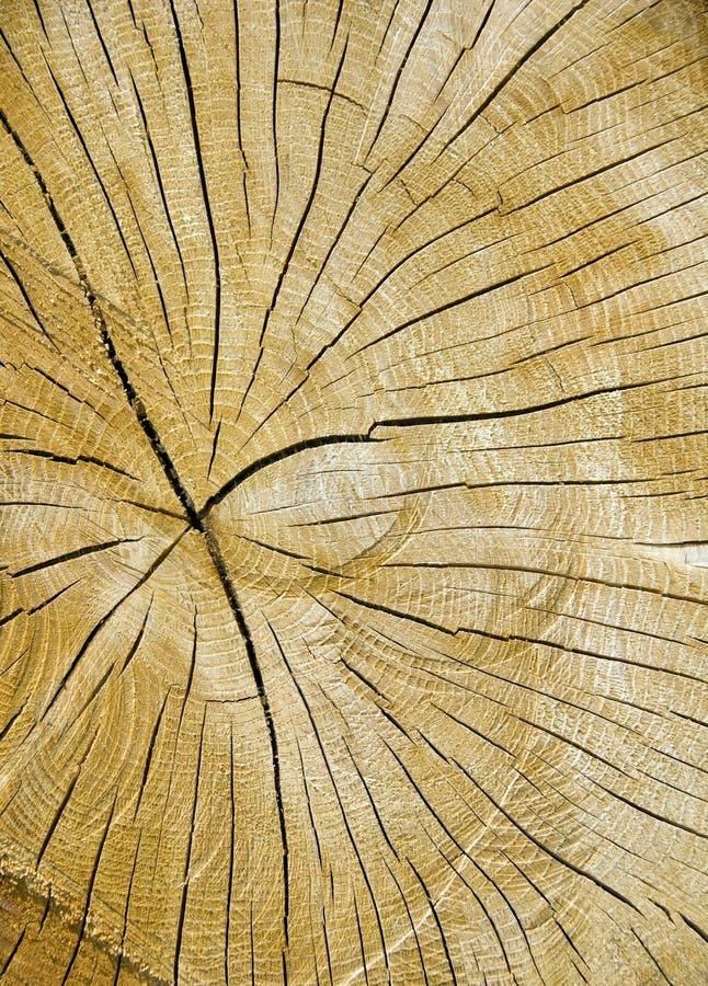 Download Sawn log stock image. Image of sawn, rings, fuel, wood - 11194561