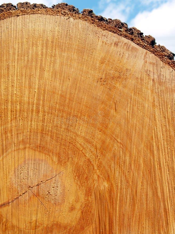 Free Sawn Log Texture; Red Oak Stock Photo - 6419370