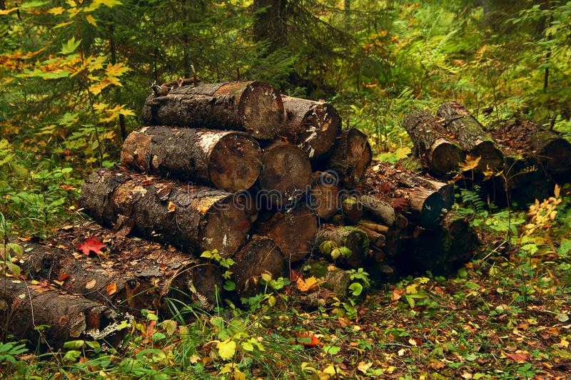 Sawn logs in the forest stock images