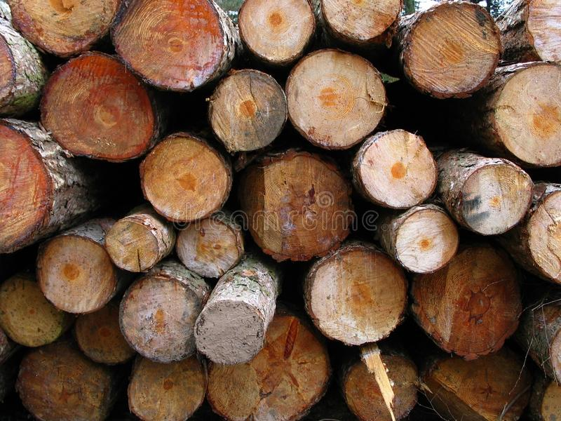 Sawn Logs. An interesting mix of colours and textures displayed by the sawn off log ends of newly felled pine and fir trees stock photo