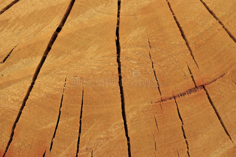 Sawed log background with copy space stock image