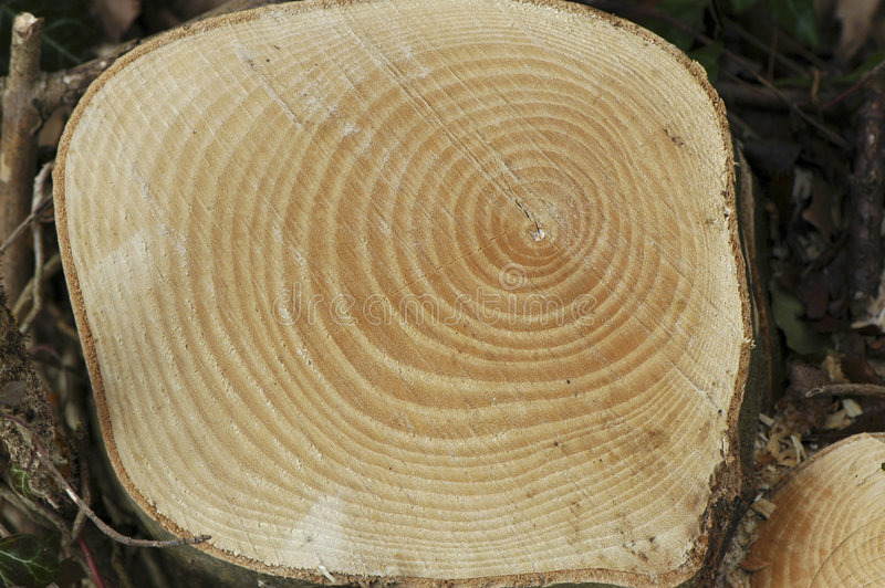 Sawn tree stock images