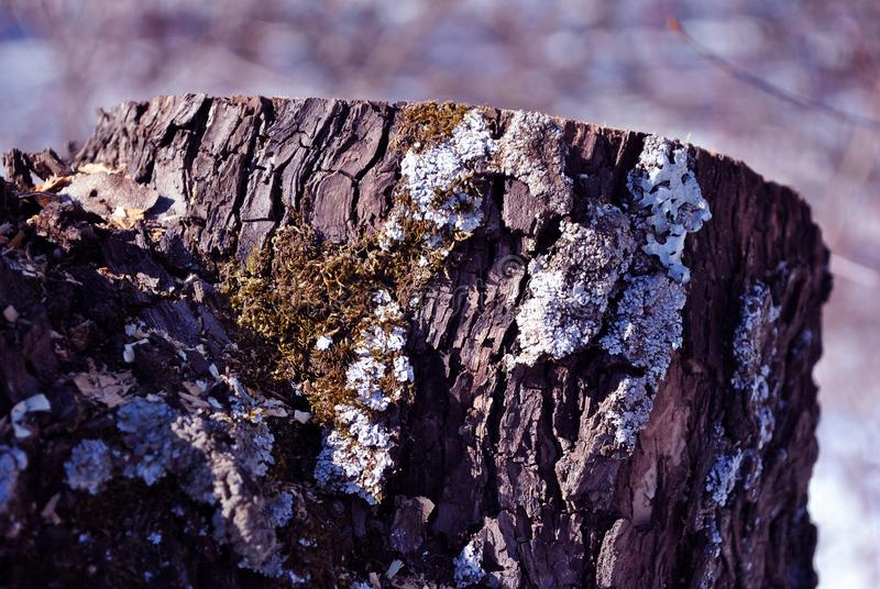 Sawn tree stump with green moss, natural organic background, close up detail side stock photography