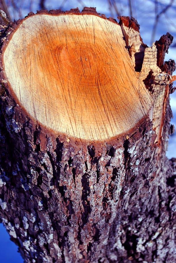 Sawn tree stump, natural organic background, close up detail stock images