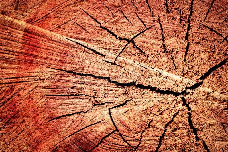 Sawn tree trunk stock image