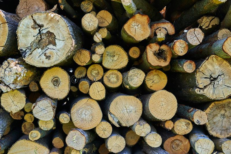 Sawn tree trunks lie in a large pile. Timber harvesting stock photos