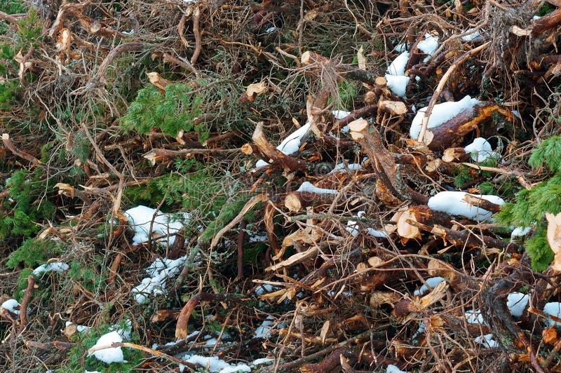 Logging in winter, sawn trees under snow. Sawn trees under snow, logging in winter stock photo