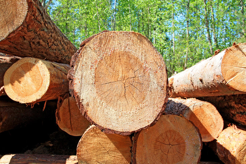 Download Sawn up tree stock photo. Image of pine, logging, industry - 11632620